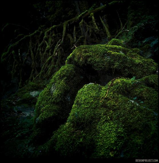 Два основных вида ощущений в местном лесу похожи на то, что либо я в сказке и стал хоббитом – малоросликом, либо в мезозое и сейчас выбегут динозавры. И даже если я хоббит, то динозавры все равно выбегут.