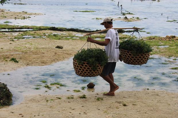 корзины с водорослями