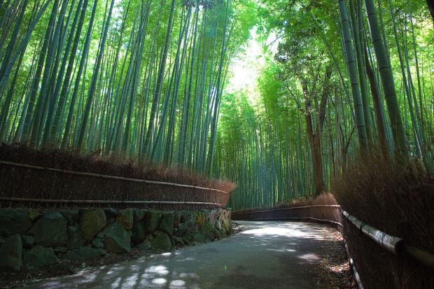 Знаменитый бамбуковый лес Сагано