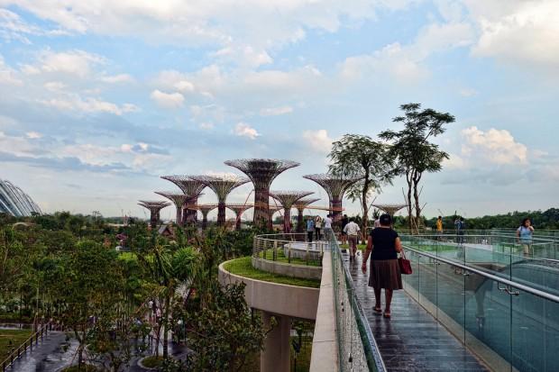 Необычные деревья в Сингапуре