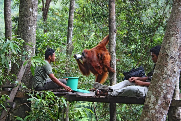Недорогие путевки в Индонезию в Медан