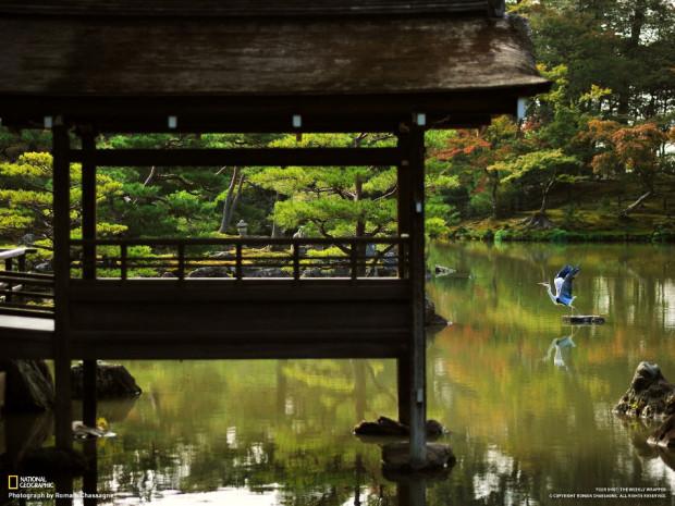 Япония, парк Киото