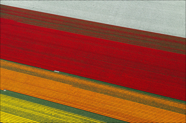 tulip-fields-001