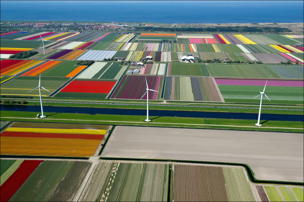 tulip-fields-003