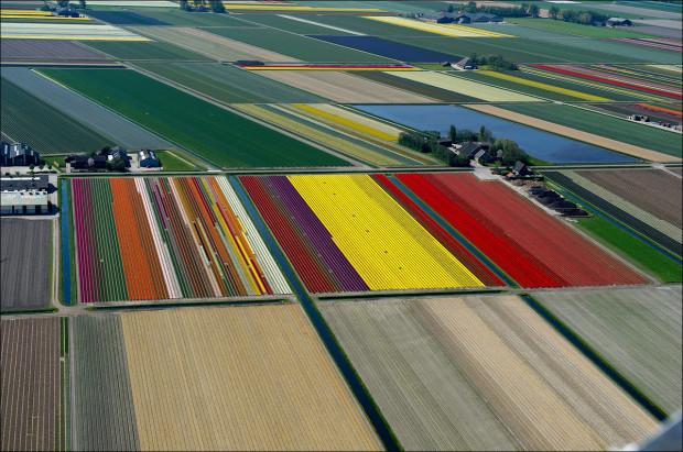 tulip-fields-005