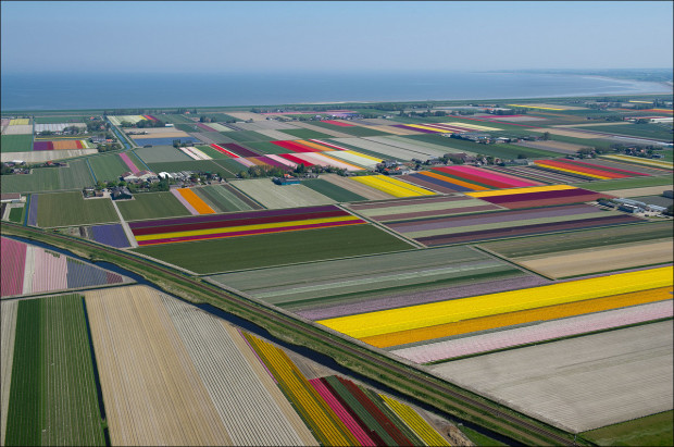 tulip-fields-006