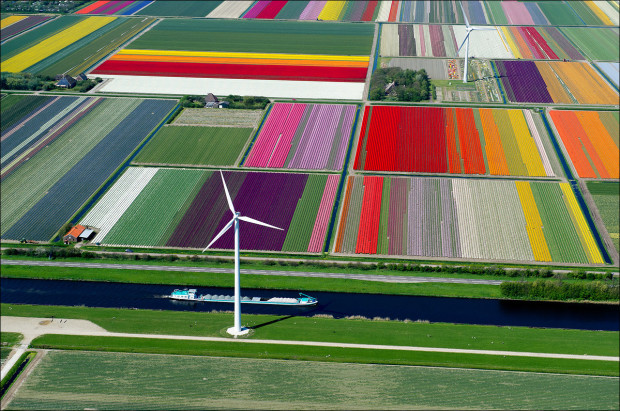 tulip-fields-007