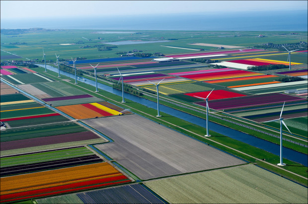 tulip-fields-008