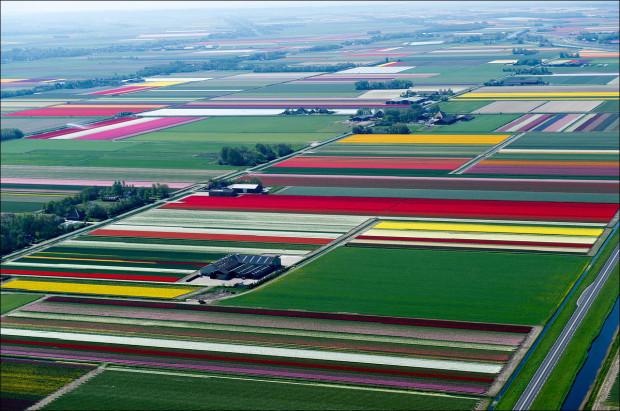 tulip-fields-010