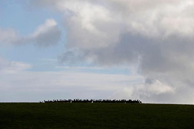Недалеко от поместья пасутся олени.