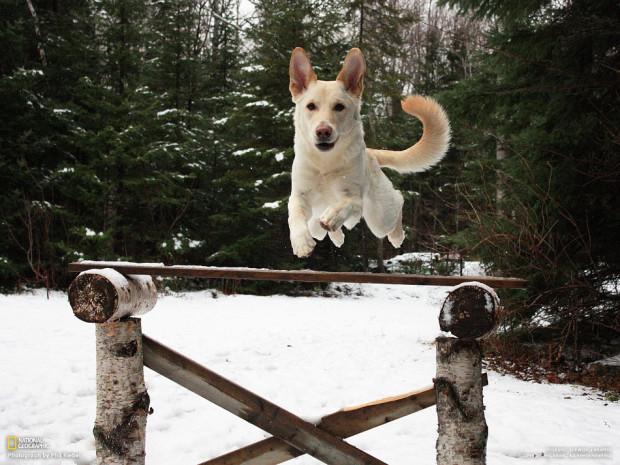 Моя собака обожает прыгать! Phil Riebel