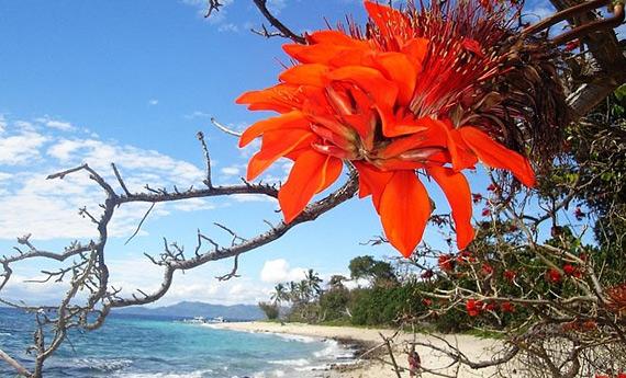 Нози Би, Мадагаскар