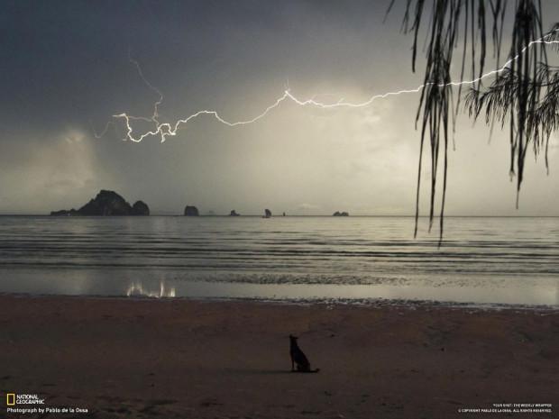 Собака на пляже в грозу. (Pablo de la Ossa)