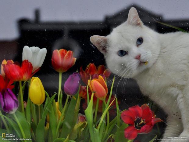 Кошка в брюссельском окне. (Karolina Lagiewka)