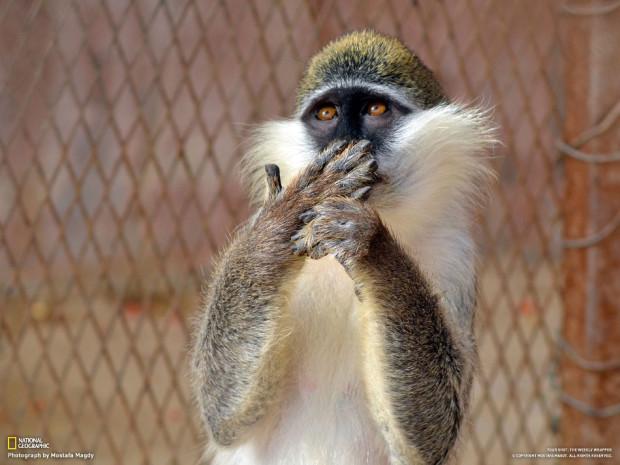 Интересно, что так удивило эту обезьяну? (Mostafa Magdy)