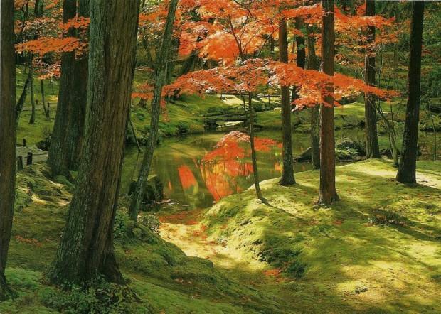 Японские сады мха