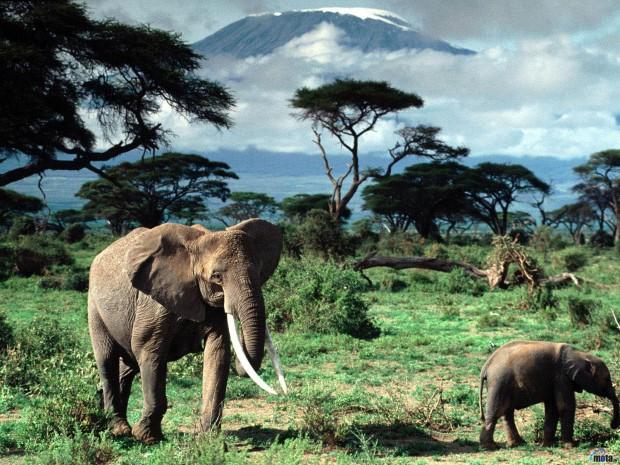 Танзания. Часть 1. Страна