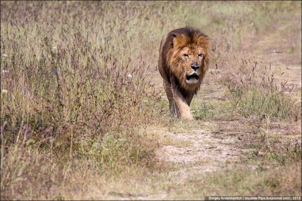 Львиный парк в Крыму