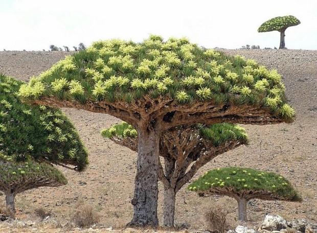 Socotra07