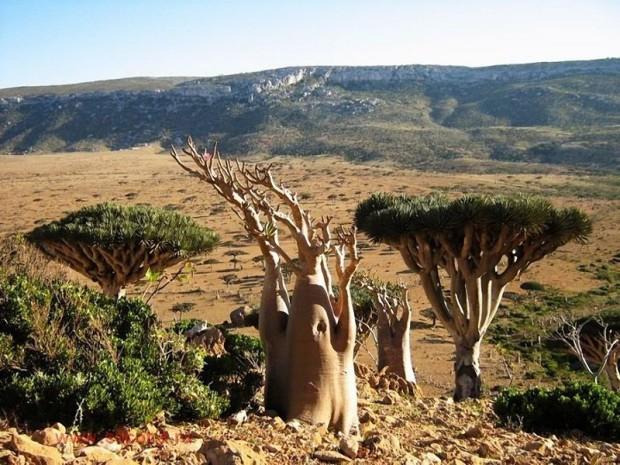 Socotra10