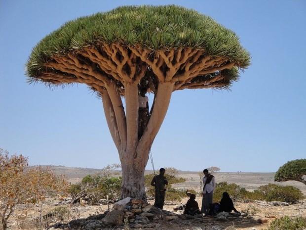 Socotra11