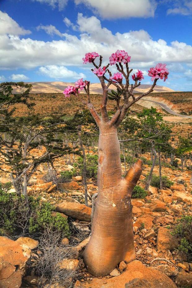 Socotra14
