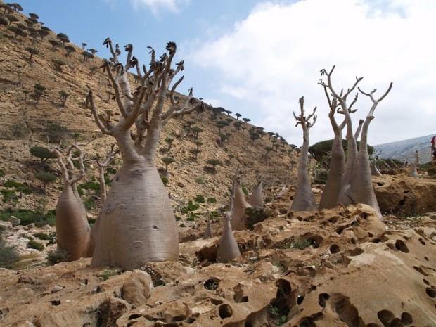 Socotra16
