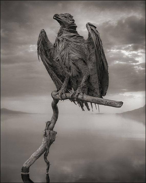 мёртвая птица