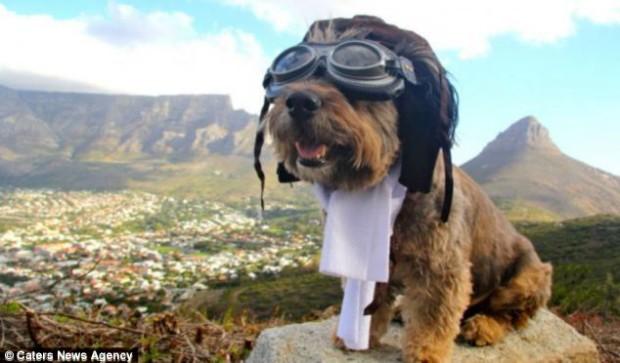 Оскар пёс путешественник