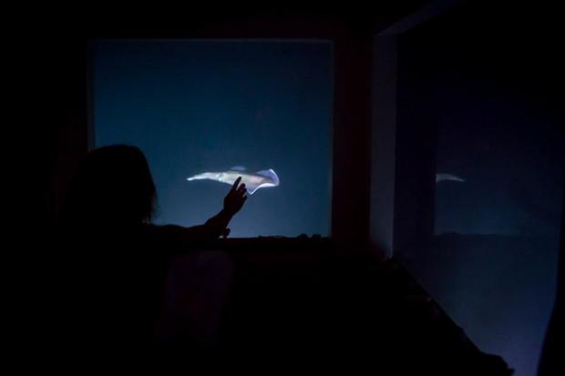 ночь под водой