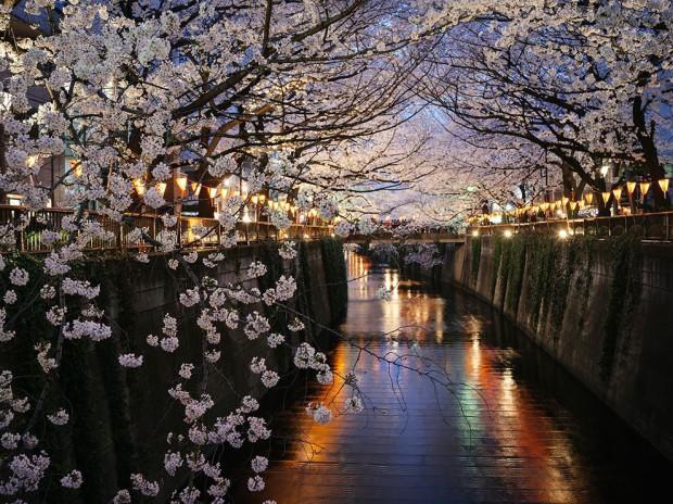 Накамегуро в Токио. Здесь можно наслаждаться цветением сакуры прямо в центре города. (Giovanni Pascarella)