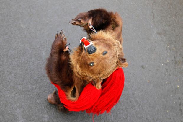 Танцовщица в костюме медведя исполняет танец на удачу. Румыния. Ритуал на удачу в Новом году, во время традиционного парада в Comanesti, в 300 км к северо-востоку от Бухареста 30 декабря 2013. В дохристианские танцоров сельских традиций, используемых в  селах. Считается, что пение и танцы отгоняют злых духов. (Богдан Крист / Reuters)