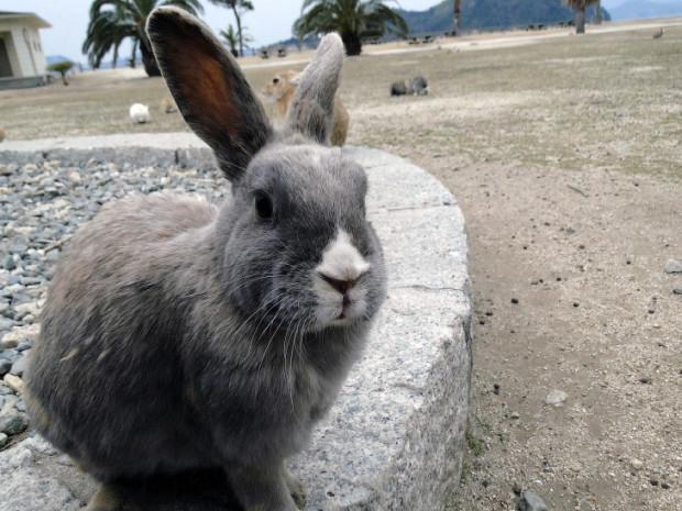 гордый кроль