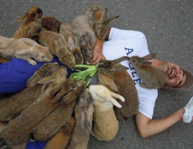 атака кролей