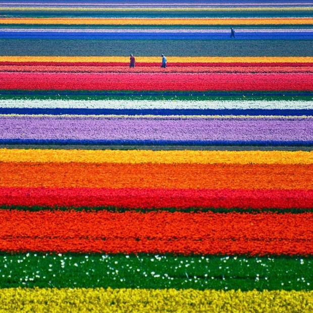 цветовые полосы