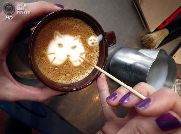 кофе коточино
