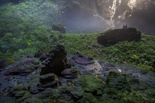 подземные джунгли