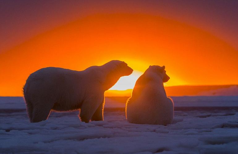 закат и медведи