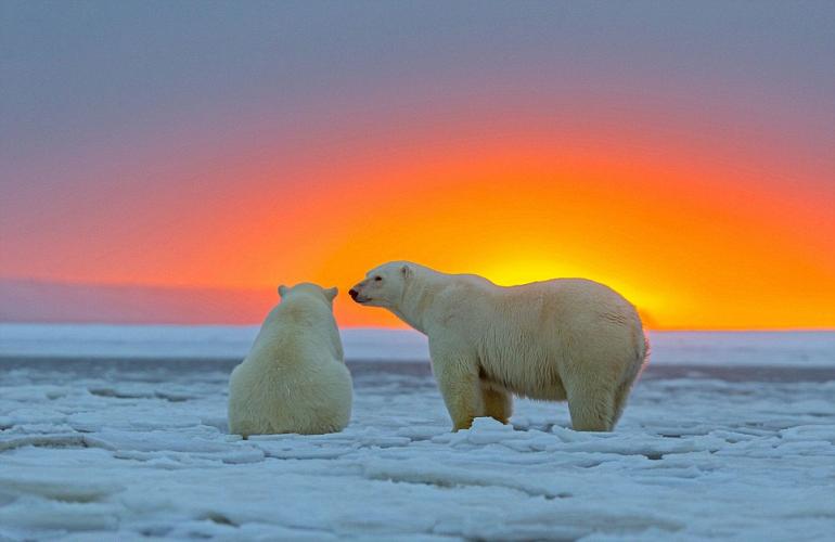 закатные медведяки
