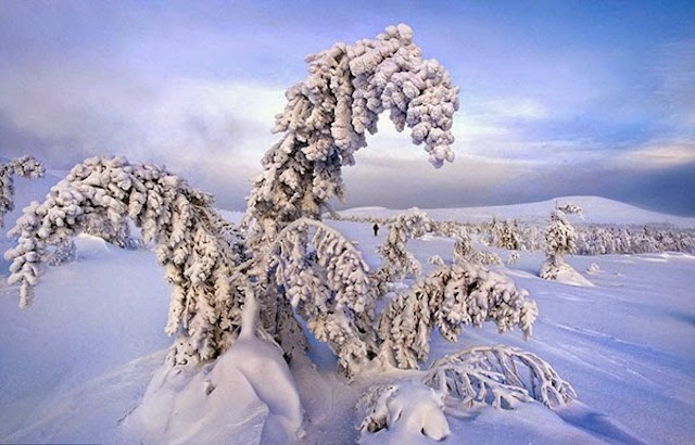 Frozen-Trees-Photography-10