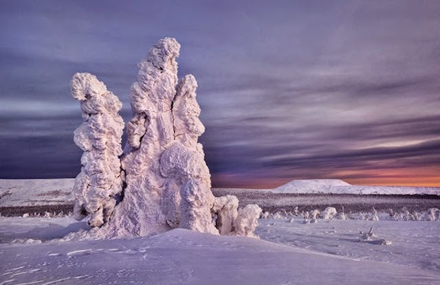 Frozen-Trees-Photography-4