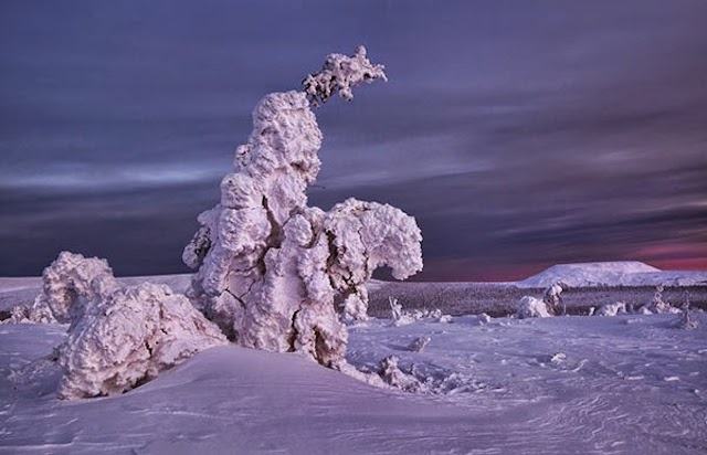 Frozen-Trees-Photography-5