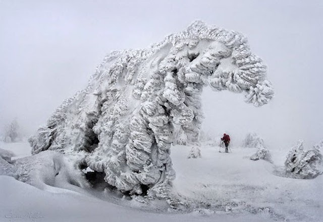 Frozen-Trees-Photography-7