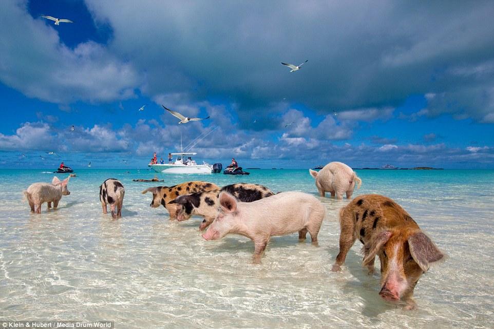 Мини отель на побережье остров Порос