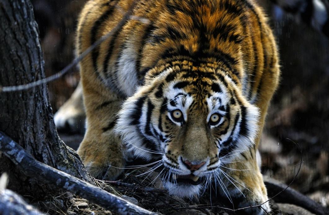 luchshie-foto-zhivotnyx-16-22-fevralya-2