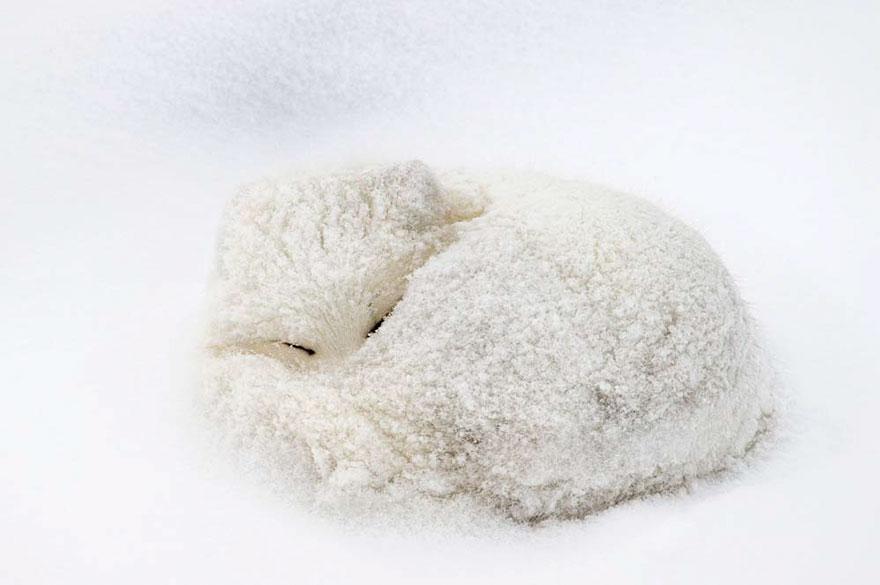 winter-fox-photography-31-5852950d9037d__880