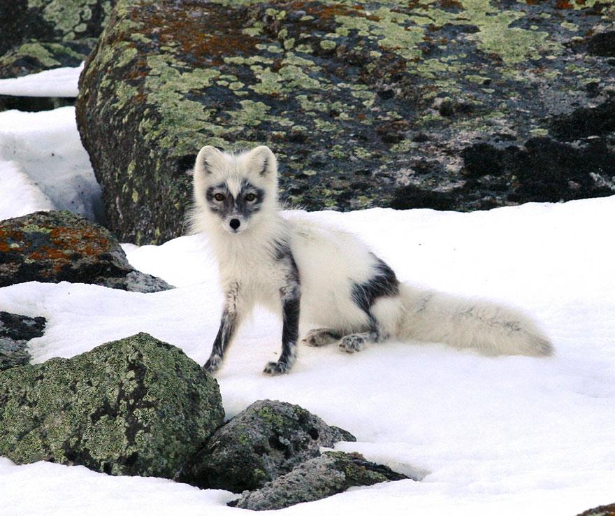 winter-fox-photography-77-5853f05e76313__880