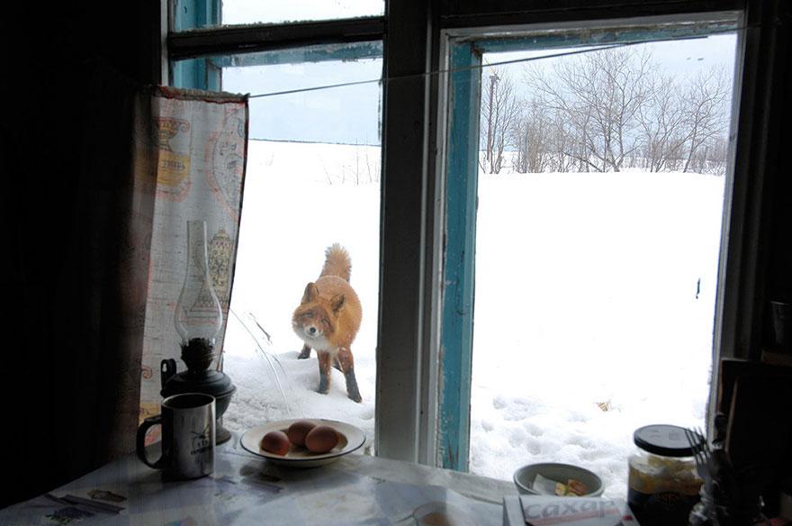 winter-fox-photography-80-5853f4185f385__880