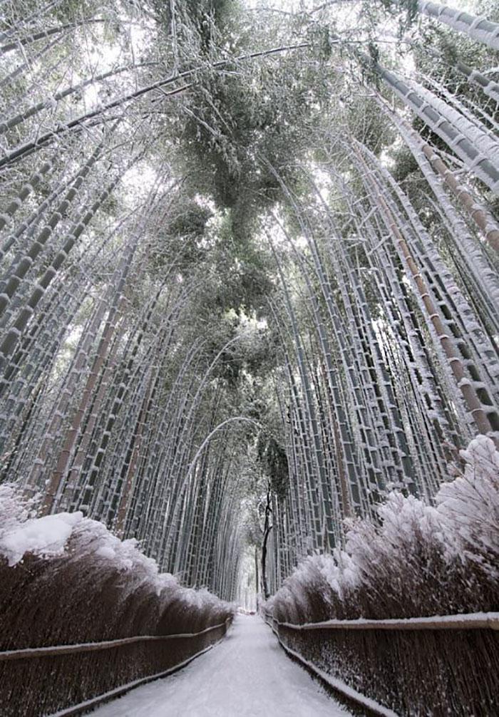 heavy-snowfall-kyoto-japan-2017-44-587dd8b45270c__700