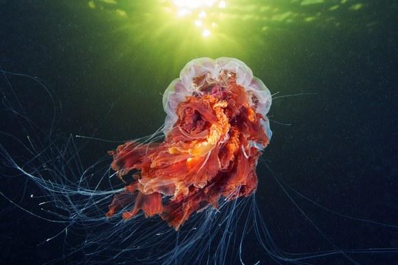 фото морских животных